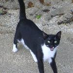 spook, a great house cat that loved beach walks