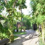 Small road leading to the villa