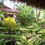 Gardens -  La Palapa Ecolodge Resort.
