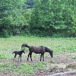 Week old colt and her mama in the pasture across the street