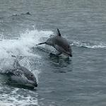 dolphins alway in for some play