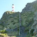 Cape Palliser, 249 steps