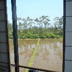 田んぼの向こうに 海