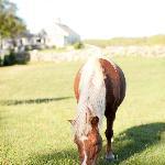 Captain Flanders Horses