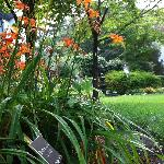 A side garden view. Notice the plant sign under the lillies?
