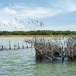flamingos at kosi bay