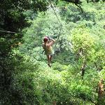 Super high ziplines in the canopy!