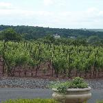 View from Sand Castle Winery III