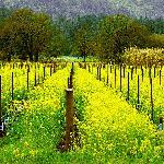 Jarrar Tours - Wine Country Tours