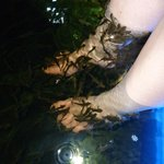 The fish loved my friend's feet!