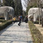 Stone Elephant Road near Xiaoling Tomb