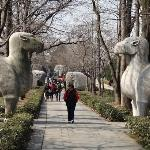 Stone Elephant Road to Ming Tomb -- Fiallo Photo