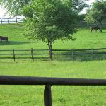 horse farm in back