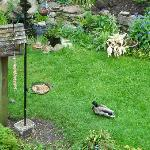 Lots of wildlife in the garden
