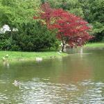The English Garten