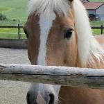 Le cheval de la patronne