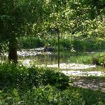 Beautiful enchanting Lily Pond