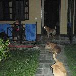 Our midnight dog clan (during power disruption)