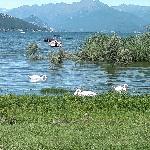 riva del lago (cigni inclusi)