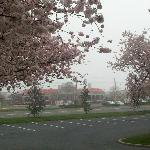 Early Morning Foggy View from the Mall Spring 2012