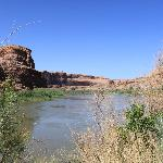 Colorado River beauty