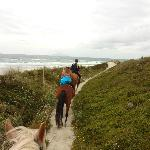 Pakiri Beach Horse Rides - Day Tours