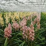De Orchideeen Hoeve