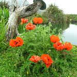 What gorgeous poppies!