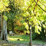 River Forest walks