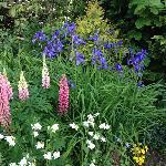 Herbacious border