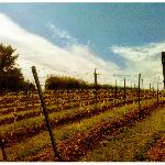Foto di Eastcott Vineyard