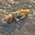 Crabs walking sideways on the beach