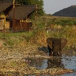 Elephant at waterhole in front of rooms ...