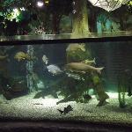 ドナウ川の生き物展示。ちょっと大きめ。