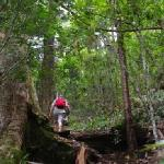 We are close to the wilderness end of the Lamington National Park. This is the track up to Westr