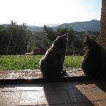 Borgo Casaglia gatti