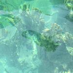 Sharp rocks under water