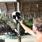 Feeding the lemurs - all rescued pets that now roam free around the hotel