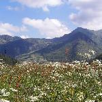 Summer Flowers View of Vacheresse