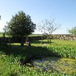 Garden area behind hote.