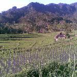 Padies Terrace when the farmers soiled padi.