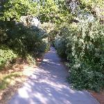 Bike Path Behind Hotel