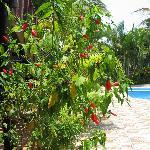 beautiful greenery around the pool