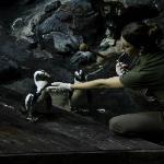 Penguin handling