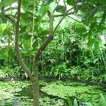 Bogota Botanical Garden: