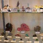 A sample of the specimens