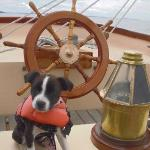 Pippa - Dogs are Welcome on the Lazy Jack II!