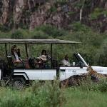 Enjoy incredible game drive activities from Savute