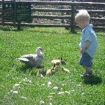 Theo and the ducklings