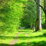Chemin de balade dans le Domaine